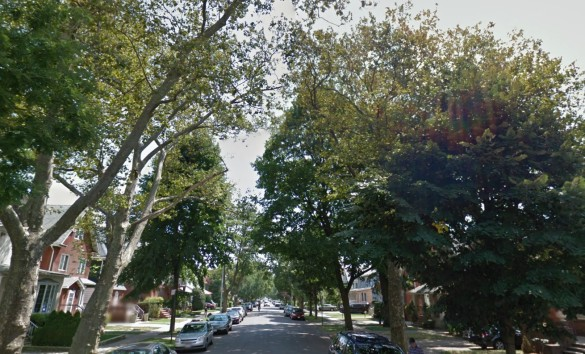 The tall trees that line East 17th Street (Source: Google Maps)
