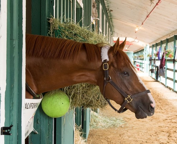 It's all your fault, California Chrome. Bad horsey! Source: Wikipedia